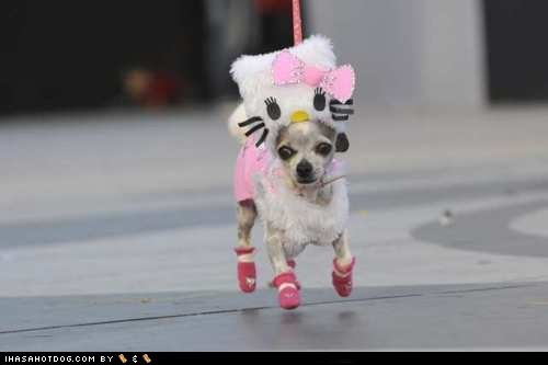 best of the week,chihuahua,costume,dogs,Hall of Fame,hello kitty