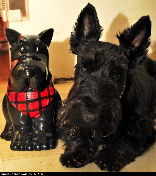 cookie jar dogs goggie ob teh week scottish terrier