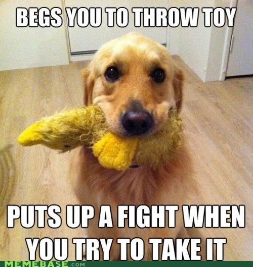 animals,cute,dogs,fight,Memes,toy