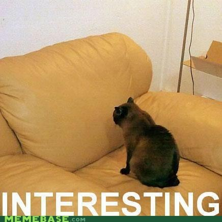 cat couch interesting Memes stare - 6120800768
