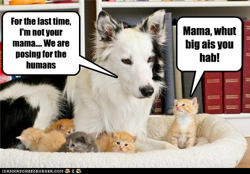 dogs kitten mama what breed