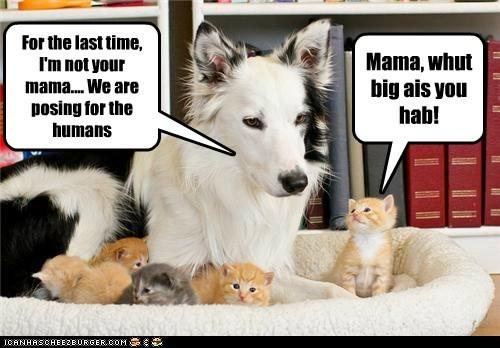 kitten mama what breed - 6120992768