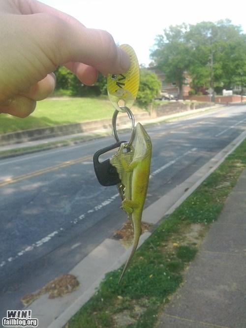 keys lizard nap - 6121021184