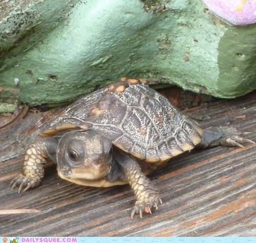 lost pet reader squees stray turtle - 6121144320
