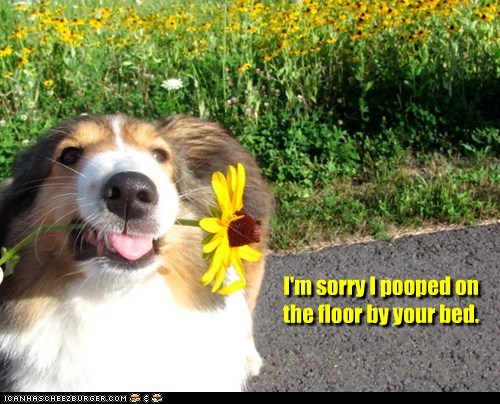 apology,border,dogs,poop,sorry,sunflower