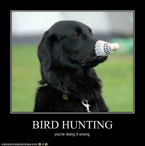 BIRD HUNTING you're doing it wrong.