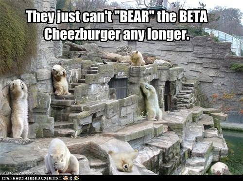 Cheezburger Image 6121842432