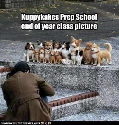dogs,picture,yearbook