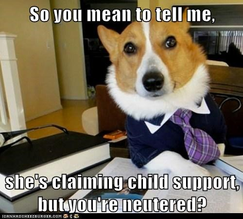 child support corgis dogs Hall of Fame Lawyer Dog Lawyers Memes neutered - 6123771648