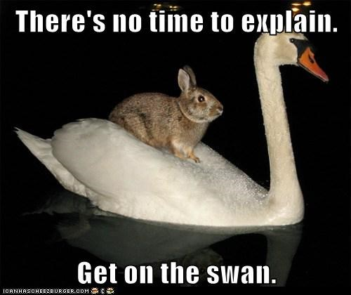 bunny,get in the car,no time to explain,riding,swan,swimming,water