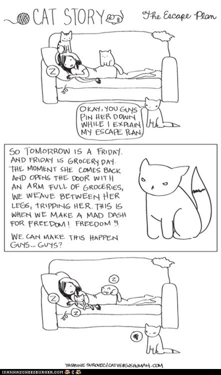 cat versus human,Cats,comic,comics,escape,FAIL,freedom,plans,schemes,sleep,sleeping