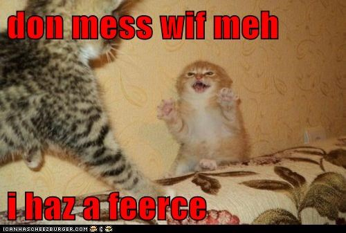 cat Cats claws danger dont-mess-with-me fierce fight fighting kitten lolcat mean - 6124092928