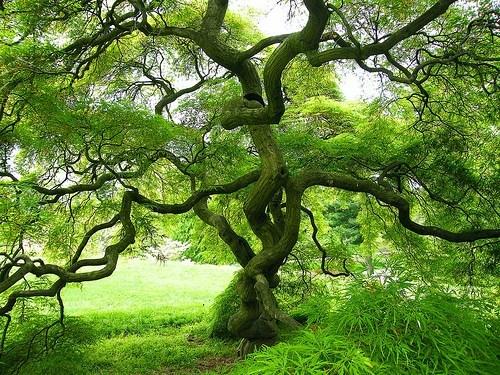 green Japan moss tree - 6124098048
