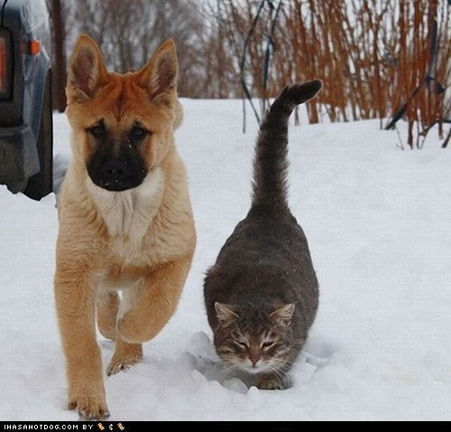 cat dogs kittehs r owr friends snow - 6124273152
