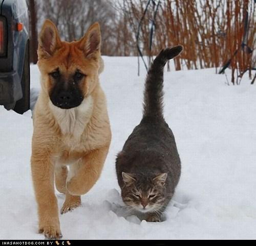 cat kittehs r owr friends snow - 6124273152