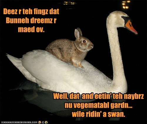 bunny,dreams,noms,riding,swan,swimming,vegetables