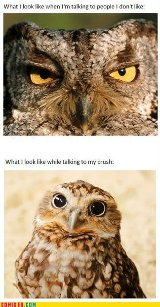 best of week crush o rly Owl talking the internets
