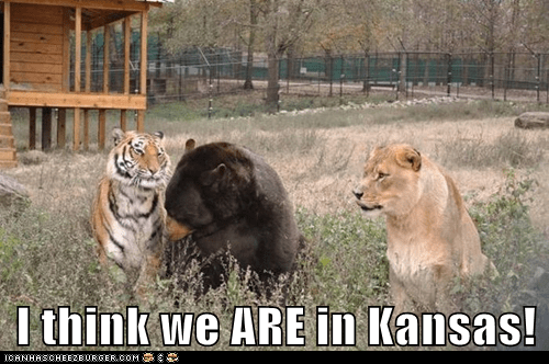 bears,Kansas,lions,oh my,tigers,together,we are,wizard of oz