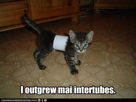 kitten lolcat skinny stuck toilet paper trapped tube