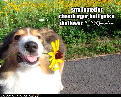 Cheezburger Image 6125411072