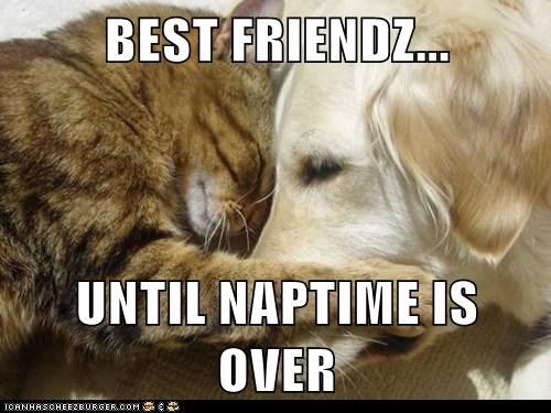 best friends cat dogs hug nap - 6125786112