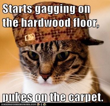 Starts gagging on the hardwood floor, pukes on the carpet.
