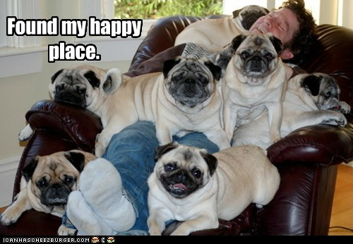 best of the week buried chair cuddle cuddling dogs Hall of Fame happy place lots of dogs pug