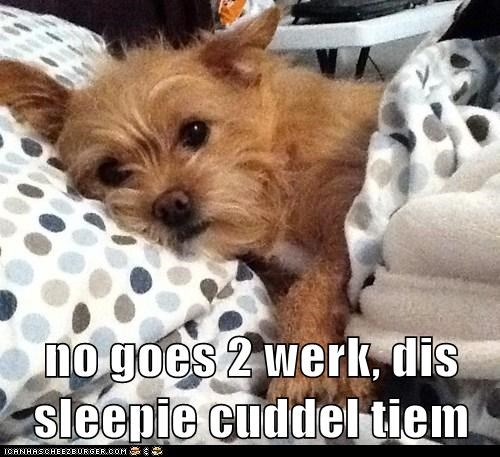 bed cuddle dogs yorkie - 6126438656
