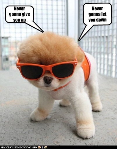 best of the week,boo,cool,dogs,Hall of Fame,lyrics,Memes,pomeranian,rick astley,rick roll,Songs,sunglasses