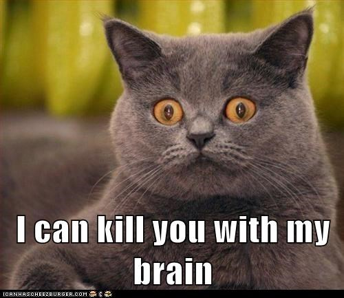 brain Cats crazy creepy kill lolcat murder - 6126953216