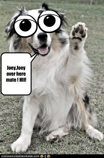 Joey,Joey over here mate ! HII! Cleverness Here
