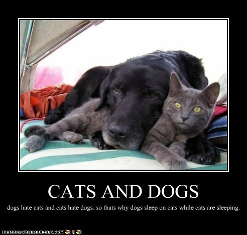 CATS AND DOGS dogs hate cats and cats hate dogs. so thats why dogs sleep on cats while cats are sleeping.