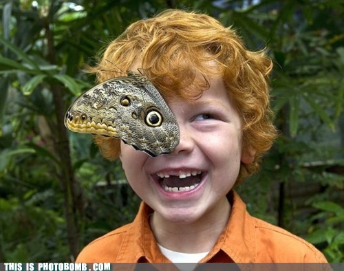 Animal Bomb,boy,butterfly,cute,eye,Perfect Timing
