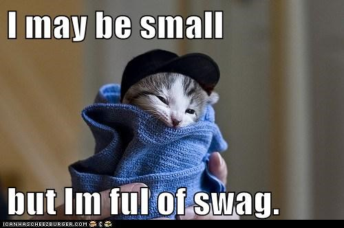 awesome cat cool gansta hip lolcat swag - 6127631104