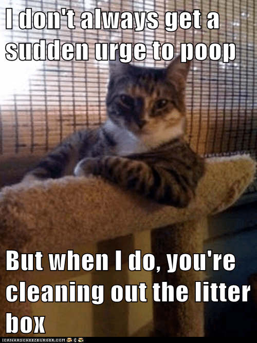 I don't always get a sudden urge to poop But when I do, you're cleaning out the litter box