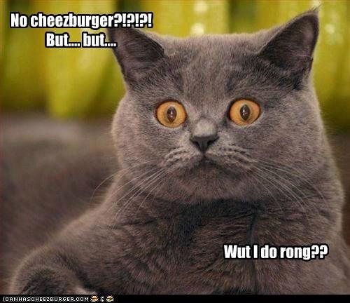 Cheezburger Image 6127900160