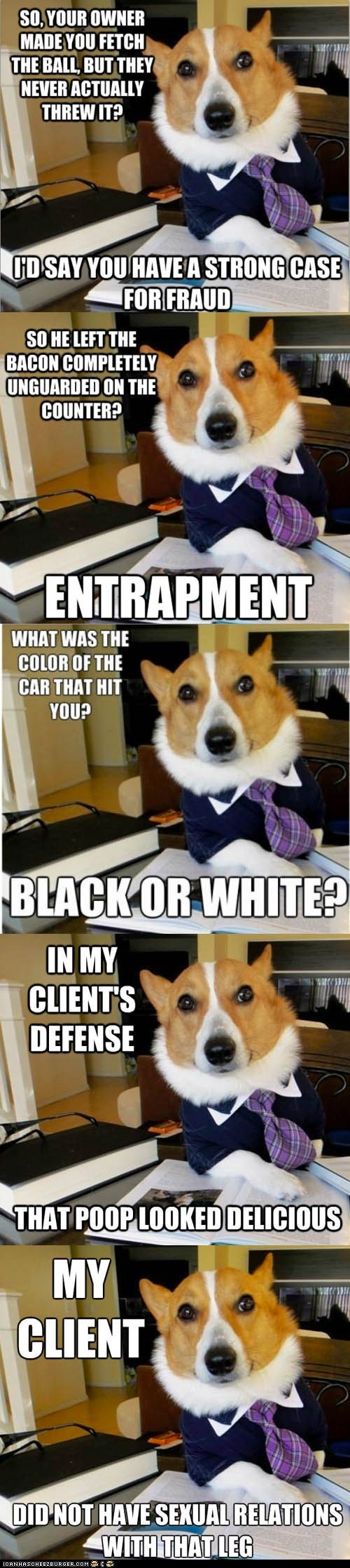 best of the week,dogs,Lawyer Dog,Lawyers,Memes,multipanel,puns