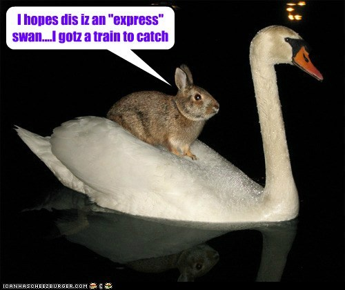 "I hopes dis iz an ""express"" swan....I gotz a train to catch"