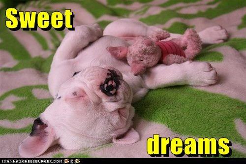 nap piglet puppy sleeping - 6128844288