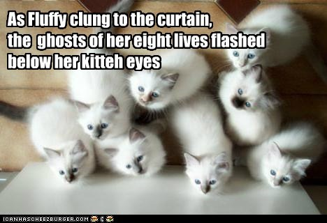 As Fluffy clung to the curtain, the ghosts of her eight lives flashed below her kitteh eyes