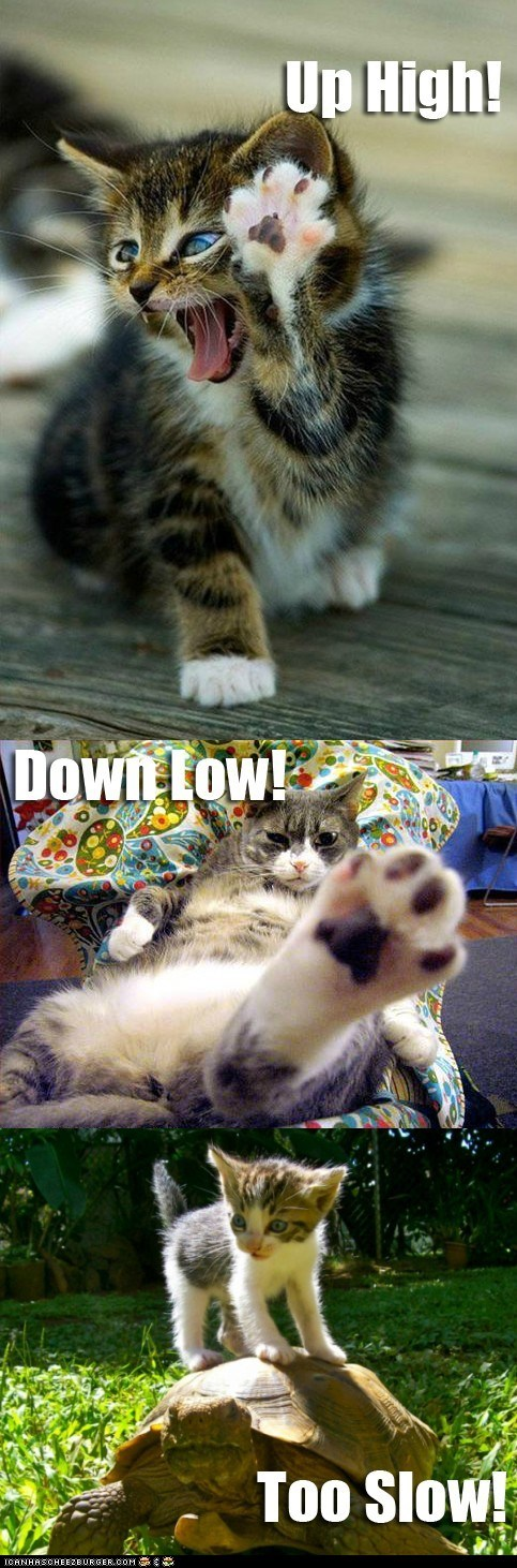 Cats,high five,high fives,holidays,multipanel,national high five day