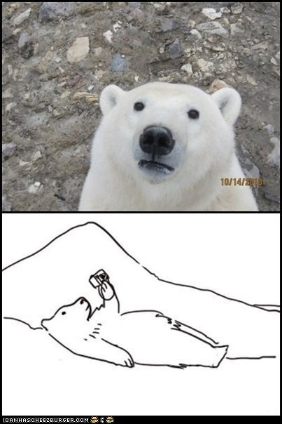 bears,cameras,gpoy,multipanel,photos,polar bear,polar bears,self portraits