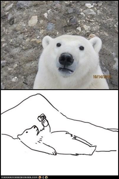 bears cameras gpoy multipanel photos polar bear polar bears self portraits - 6129149696