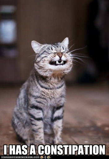 cat Cats constipated constipation lolcat ouch ow pain painful poop teeth - 6129156608