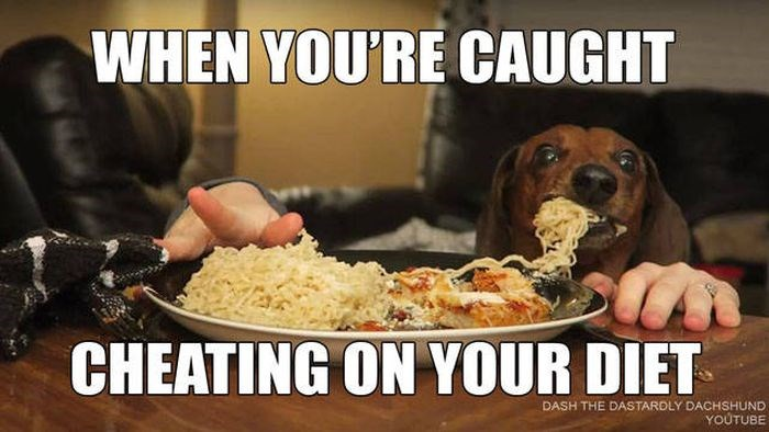 diet meal funny memes cheat Memes animal memes animals - 6129157