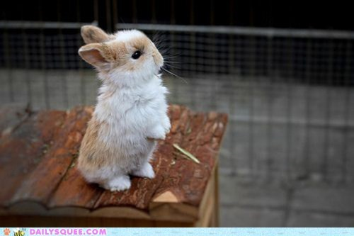 bunnies,bunny,human-like,rabbit,stand,standing,tall,tiny,view