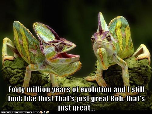 chameleons,disappointed,evolution,great,lizards,ugly