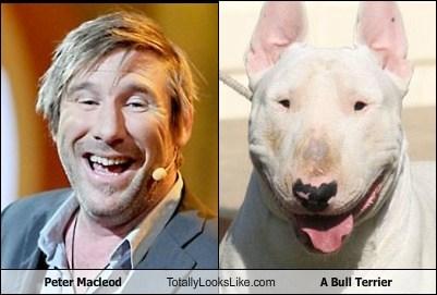 animal bull terrier dogs funny peter macleod - 6129954048