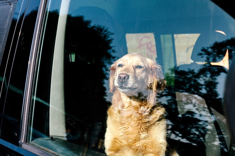 dogs tips locked pets car parked save safety - 6130181