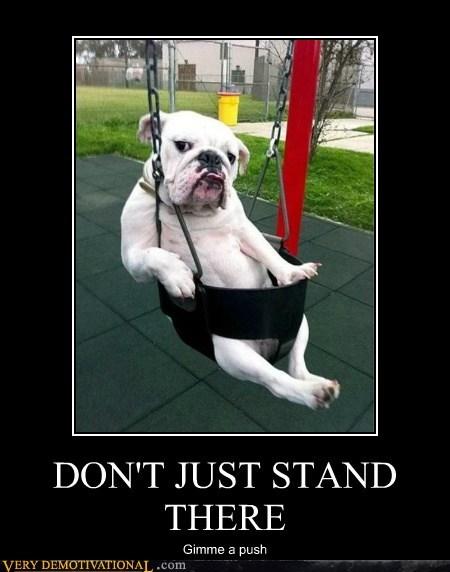 animals bulldog dogs hilarious push - 6130530304